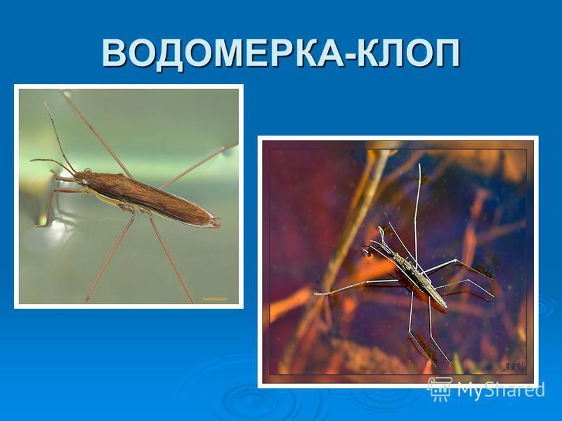 ВОДОМЕРКА-КЛОП