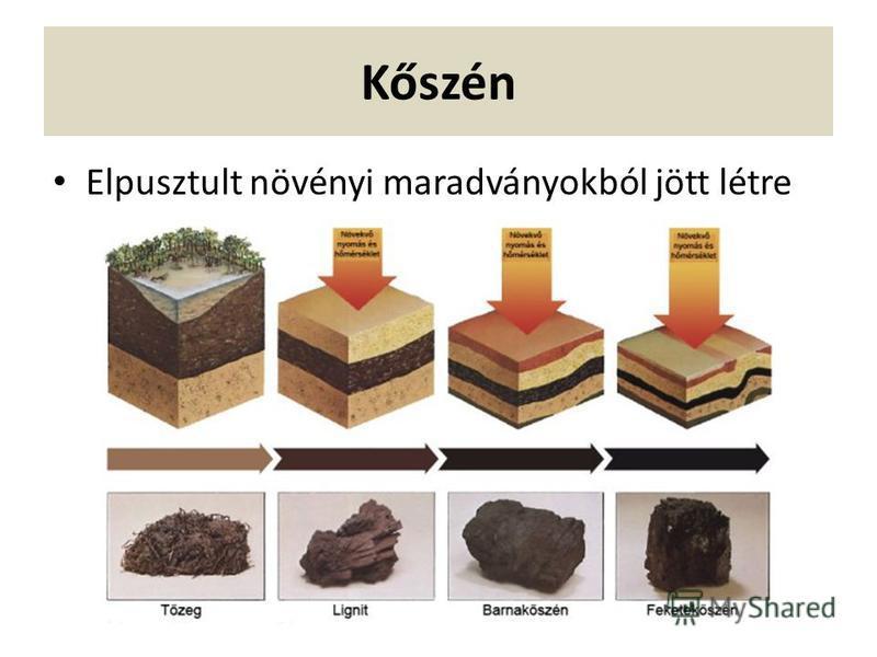 Kőszén Elpusztult növényi maradványokból jött létre