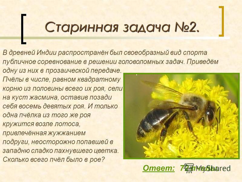 Старинная задача 2. Ответ: 72 пчелы. Пчёлы в числе, равном квадратному корню из половины всего их роя, сели на куст жасмина, оставив позади себя восемь девятых роя. И только одна пчёлка из того же роя кружится возле лотоса, привлечённая жужжанием под
