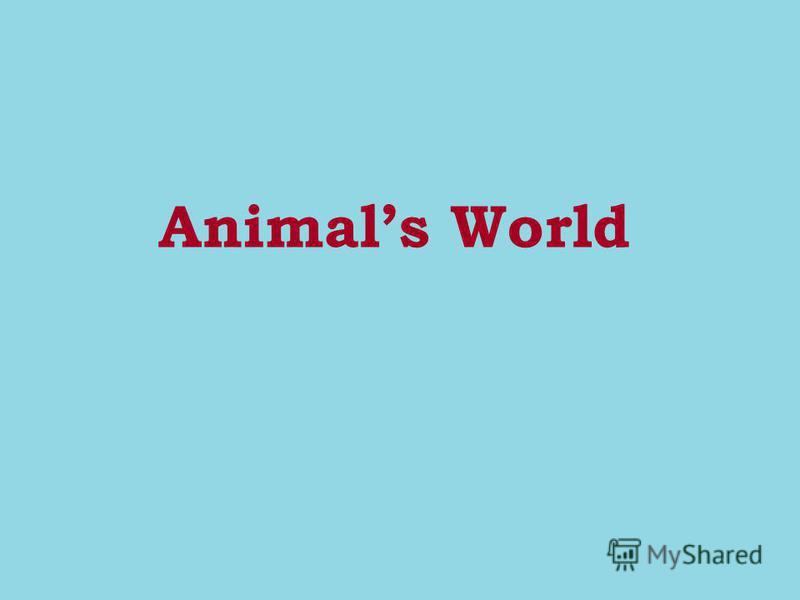 Animals World