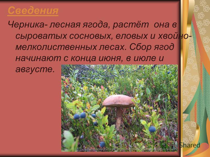 Сведения Черника- лесная ягода, растёт она в сыроватых сосновых, еловых и хвойно- мелколиственных лесах. Сбор ягод начинают с конца июня, в июле и августе.