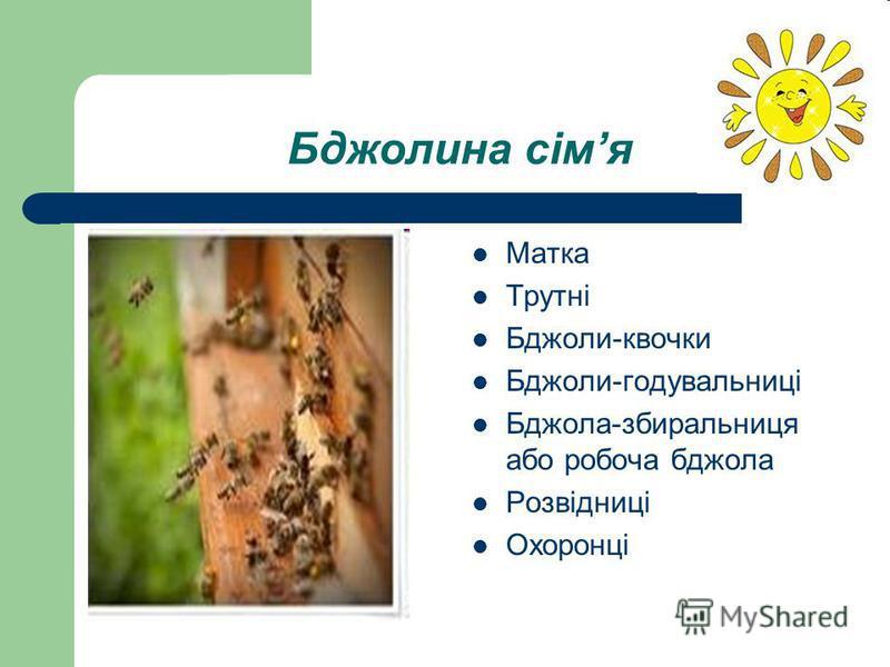 Бджолина сімя Матка Трутні Бджоли-квочки Бджоли-годувальниці Бджола-збиральниця або робоча бджола Розвідниці Охоронці