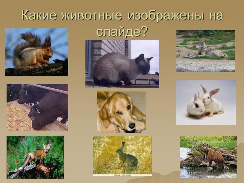 Какие животные изображены на слайде?