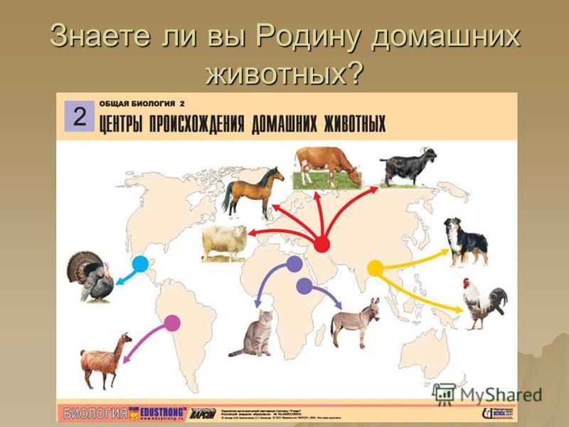 Знаете ли вы Родину домашних животных?