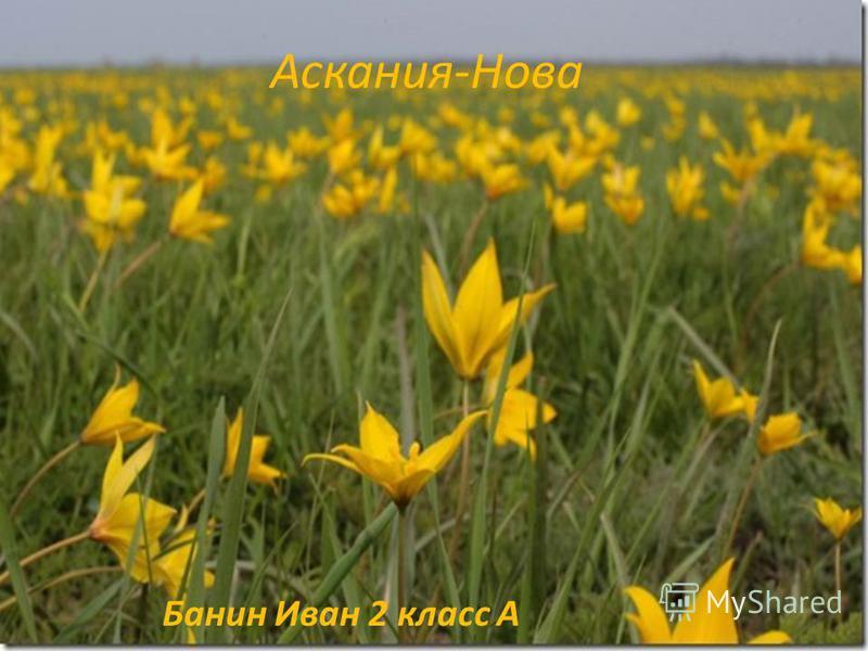 Аскания-Нова Банин Иван 2 класс А