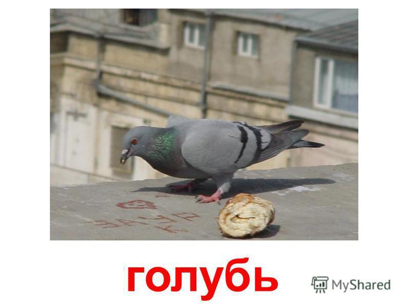 птицы (часть 2)