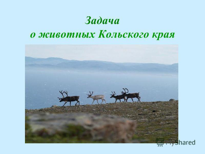 Задача о животных Кольского края