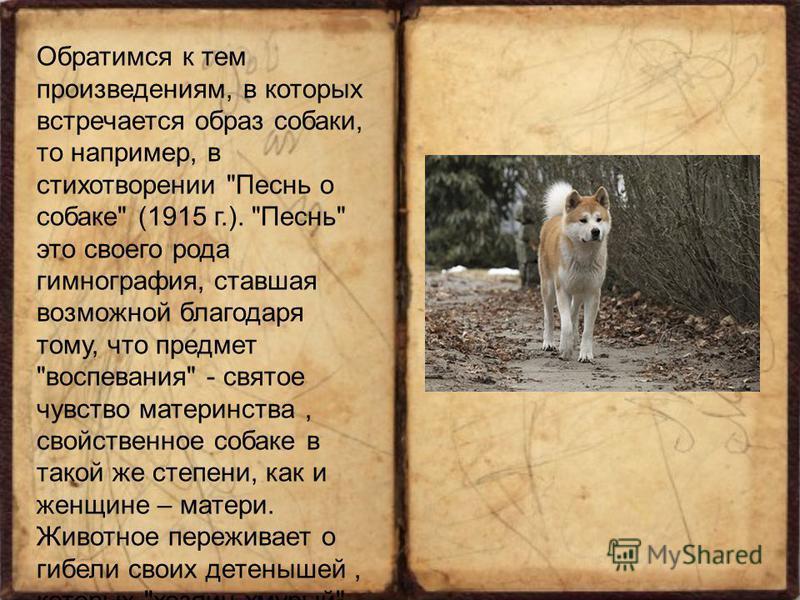 Обратимся к тем произведениям, в которых встречается образ собаки, то например, в стихотворении