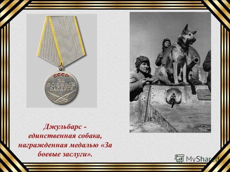 Джульбарс - единственная собака, награжденная медалью «За боевые заслуги».