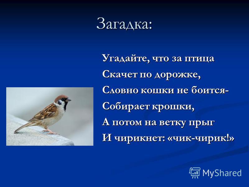 Третий вариант игры: «Отгадай загадку» Взрослый предлагает детям отгадать загадки о зимующих птицах.