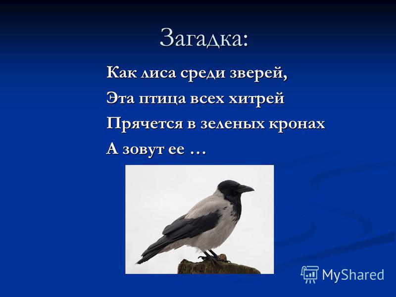 Загадка: Угадайте, что за птица Скачет по дорожке, Словно кошки не боится- Собирает крошки, А потом на ветку прыг И чирикнет: «чик-чирик!»