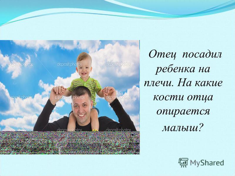 Отец посадил ребенка на плечи. На какие кости отца опирается малыш?