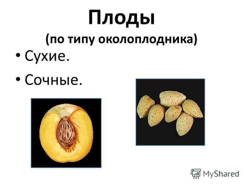 1. Цветок – орган полового размножения 2. Цветы есть у всех растений 3. Главная часть цветка – лепестки венчика 4. Пестик состоит из завязи, рыльца, столбик 5. Главные части цветка – пестик и тычинки 6. Цветок – приспособление для опыления 7. На мест
