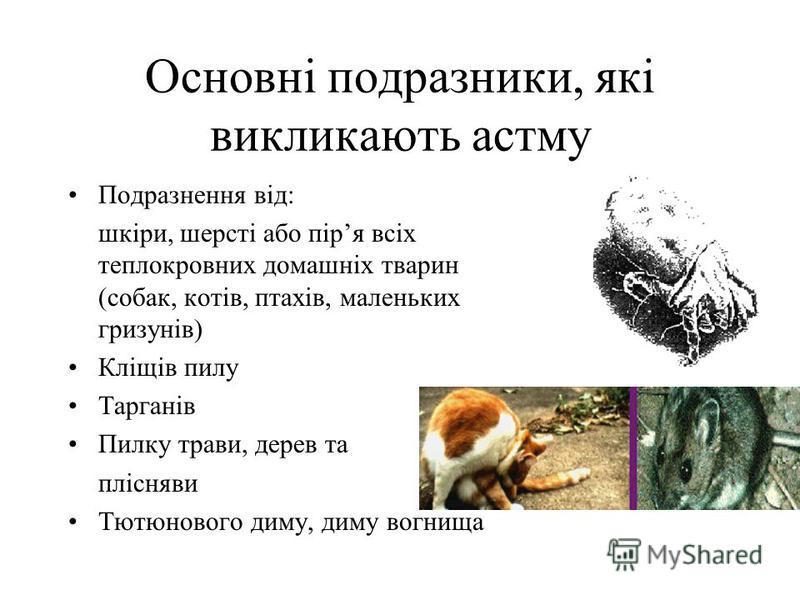 Основнi подразники, якi викликають астму Подразнення вiд: шкiри, шерстi або пiря всiх теплокровних домашнiх тварин (собак, котiв, птахiв, маленьких гризунiв) Клiщiв пилу Тарганiв Пилку трави, дерев та плiсняви Тютюнового диму, диму вогнища