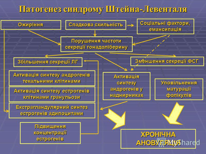 Патогенез синдрому Штейна-Левенталя Спадкова схильність Збільшення секреції ЛГ Соціальні фактори, емансипація Порушення частоти секреції гонадоліберину Ожиріння Підвищення концентрації естрогенів Активація синтезу андрогенів текальними клітинами Змен