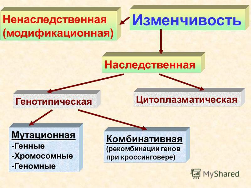 Ненаследственная (модификационная) Наследственная Генотипическая Цитоплазматическая Мутационная -Генные -Хромосомные -Геномные Комбинативная (рекомбинации генов при кроссинговере) Изменчивость