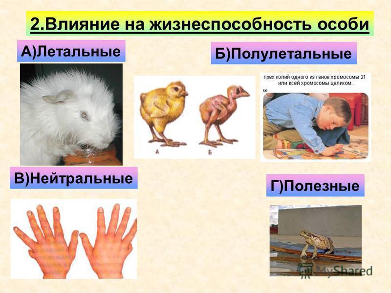 2. Влияние на жизнеспособность особи А)Летальные Б)Полулетальные В)Нейтральные Г)Полезные