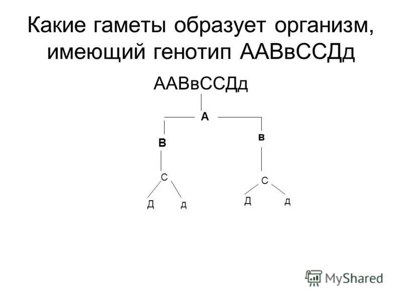 Какие гаметы образует организм, имеющий генотип ААВв ССДд ААВв ССДд А В в С С Дд Дд