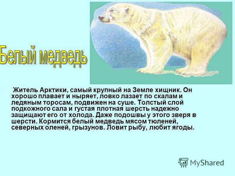 Житель Арктики, самый крупный на Земле хищник. Он хорошо плавает и ныряет, ловко лазает по скалам и ледяным торосам, подвижен на суше. Толстый слой подкожного сала и густая плотная шерсть надежно защищают его от холода. Даже подошвы у этого зверя в ш