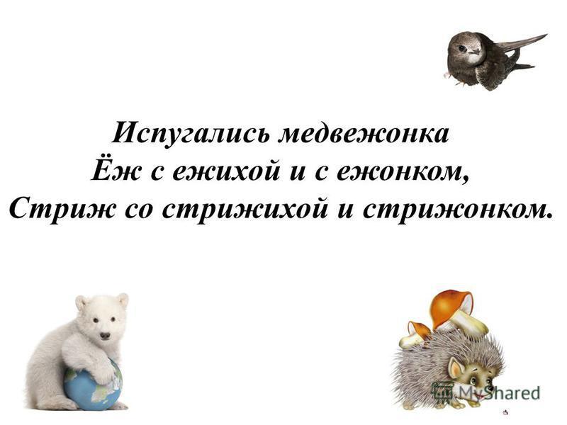 Испугались медвежонка Ёж с ежихой и с ежонком, Стриж со стрижихой и стрижонком.