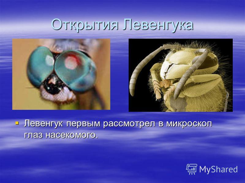 Открытия Левенгука Левенгук первым рассмотрел в микроскоп глаз насекомого. Левенгук первым рассмотрел в микроскоп глаз насекомого.