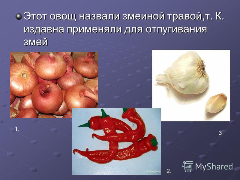 Этот овощ назвали змеиной травой,т. К. издавна применяли для отпугивания змей 1. 3 2.