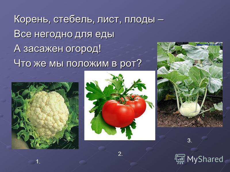 Корень, стебель, лист, плоды – Все негодно для еды А засажен огород! Что же мы положим в рот? 1. 2. 3.