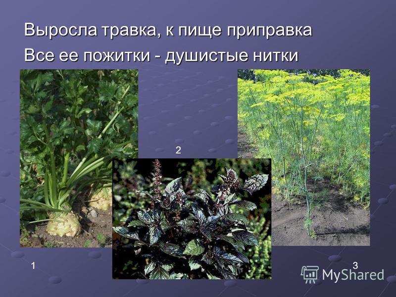 Выросла травка, к пище приправка Все ее пожитки - душистые нитки 1 2 3