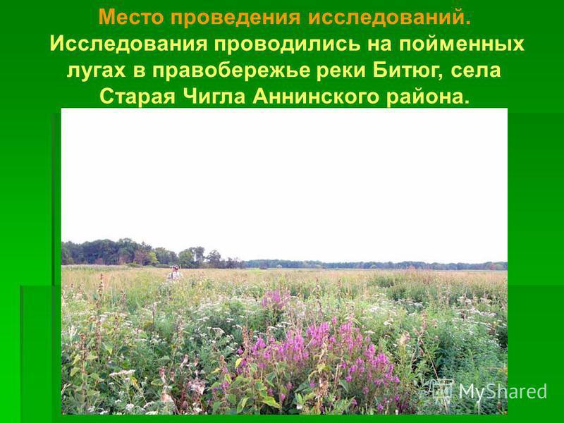 Место проведения исследований. Исследования проводились на пойменных лугах в правобережье реки Битюг, села Старая Чигла Аннинского района.