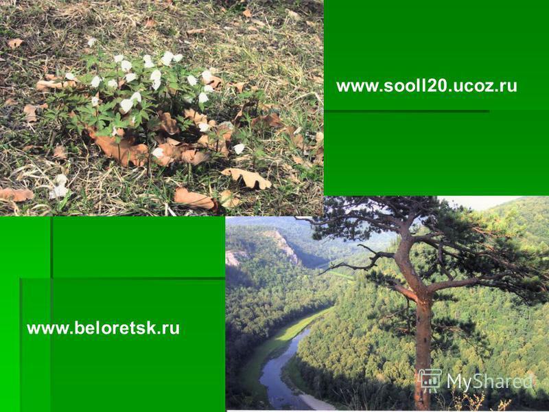www.beloretsk.ru www.sooll20.ucoz.ru