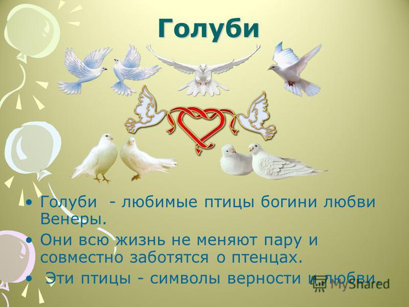 Голуби Голуби Голуби - любимые птицы богини любви Венеры. Они всю жизнь не меняют пару и совместно заботятся о птенцах. Эти птицы - символы верности и любви.