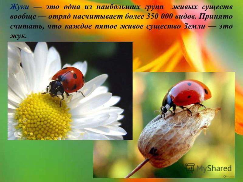 Жуки это одна из наибольших групп живых существ вообще отряд насчитывает более 350 000 видов. Принято считать, что каждое пятое живое существо Земли это жук.