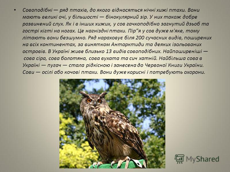 Совоподібні ряд птахів, до якого відносяться нічні хижі птахи. Вони мають великі очі, у більшості бінокулярний зір. У них також добре розвинений слух. Як і в інших хижих, у сов гачкоподібно загнутий дзьоб та гострі кігті на ногах. Це нагніздні птахи.