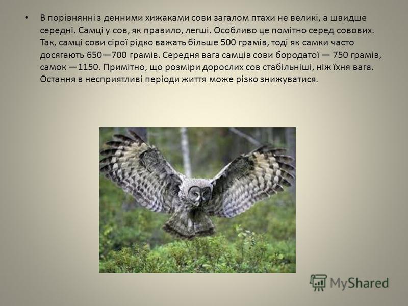 В порівнянні з денними хижаками сови загалом птахи не великі, а швидше середні. Самці у сов, як правило, легші. Особливо це помітно серед совових. Так, самці сови сірої рідко важать більше 500 грамів, тоді як самки часто досягають 650700 грамів. Сере