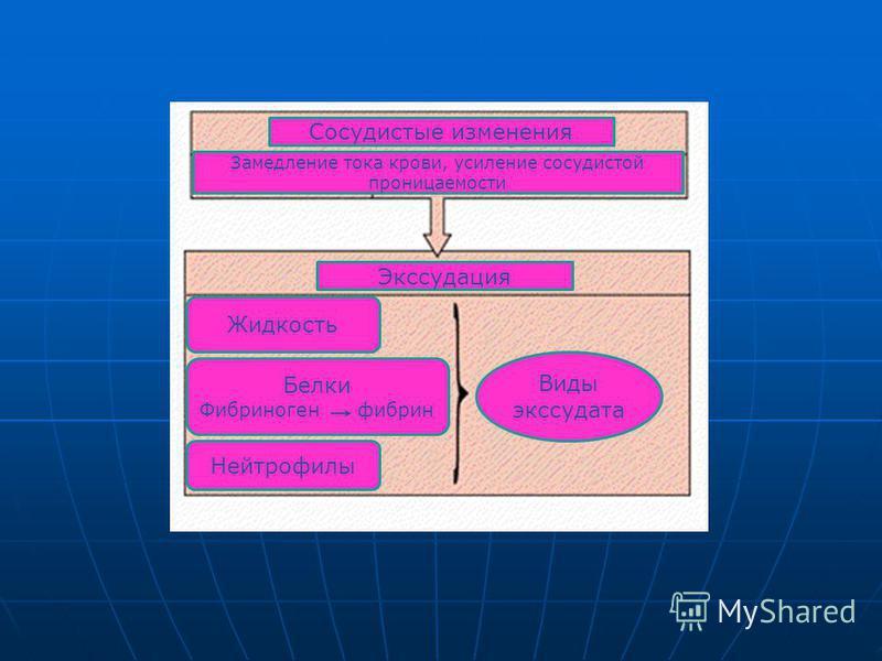 Сосудистые изменения Замедление тока крови, усиление сосудистой проницаемости Экссудация Виды экссудата Жидкость Белки Фибриноген фибрин Нейтрофилы