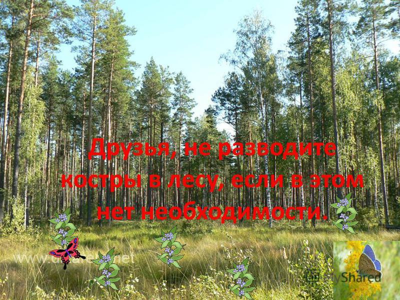 Друзья, не разводите костры в лесу, если в этом нет необходимости.