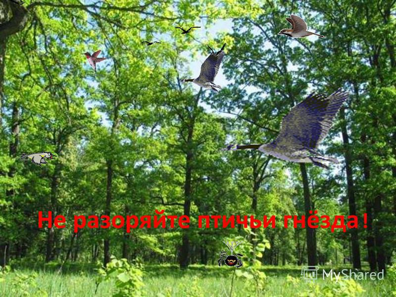 Не разоряйте птичьи гнёзда !