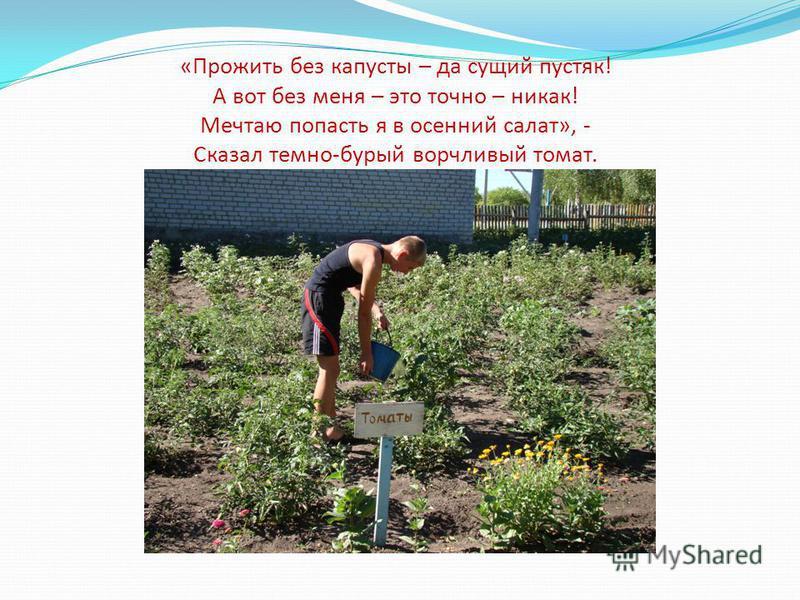 «Прожить без капусты – да сущий пустяк! А вот без меня – это точно – никак! Мечтаю попасть я в осенний салат», - Сказал темно-бурый ворчливый томат.