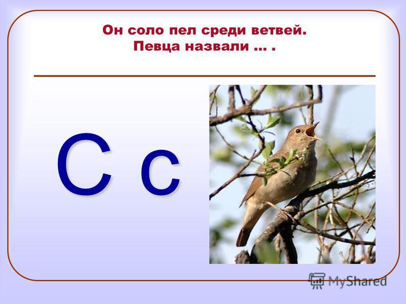 Он соло пел среди ветвей. Певца назвали …. С с