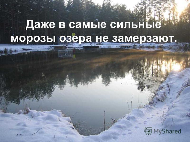 Даже в самые сильные морозы озера не замерзают.