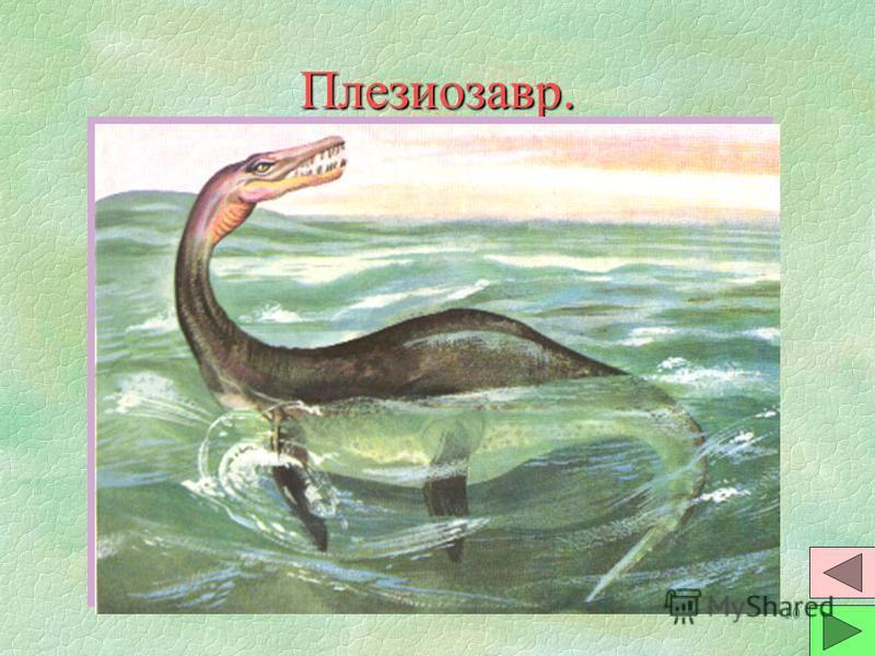 9 Ихтиозавр. §Они похожи на рыб. Дыхание сохрани- ли воздушное. Позвоночник рыбьего типа и при плавании изгибалась в горизонтальной плоскости. §Были хищниками. Челюсти с много- численными зубами. Вероятно были живородящими. §Размеры от 1 до 12 метров