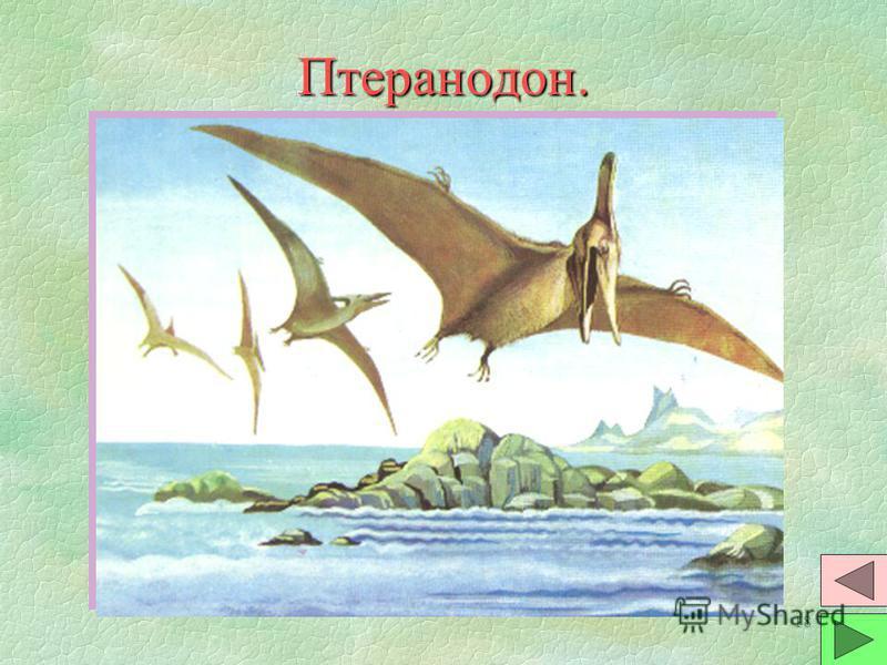 17 Сордес. §Э§Это первое по-настоящему летающее позвоночное животное. §И§Имели небольшое тело, крупную голову с зубастой пастью, узкие кожистые крылья. §П§Предположительно - это теплокровные животные. Питались рыбой и насекомыми. Размером были с воро