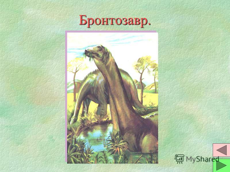 19 Птеранодон. §Птеродактили (пальцекрылы) были наиболее совершенными летунами среди птерозавров. §Рыбоядны. Размах крыльев до 8 метров. Вес до 30 кг. Взлетали с прибрежных скал, т.к. разбегаться не могли из-за слабых ног. §Существовали одновременно