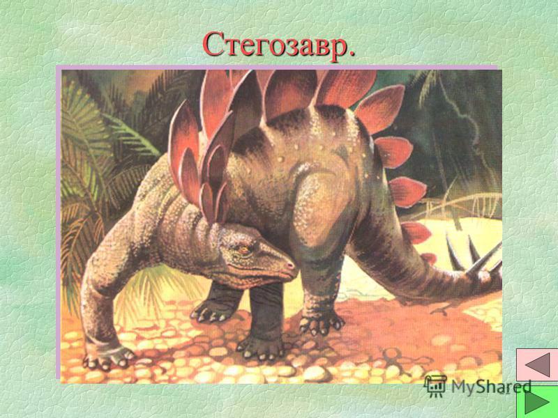 21 Бронтозавр. §Самый крупный динозавр. Длина животного до 30 метров. Вес до 40 тонн. Были экземпляры с весом до 100 тонн. Растительноядный. §Мозг по размерам не более чем у кошки. В крестце имелось расширение спинного мозга, управляло задними ногами