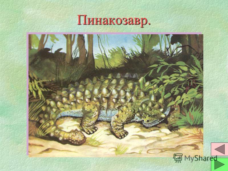 25 Тарбозавр. §Ящер-разбойник - один из самых больших хищных динозавров. По строению, похожи на птиц. Размеры - от размеров курицы до 15 м в длину. §Ходили на задних ногах. Орудием нападения были когтистые лапы и голова с большими зубами. Возможно, ч