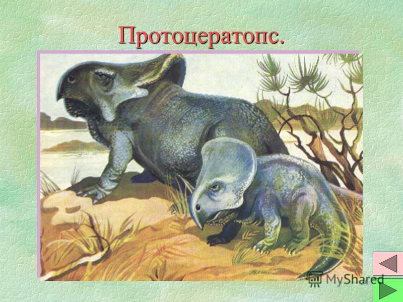 29 Зауролоф. §Это самый крупный из утконосых динозавров. Размер достигал 9 м. Это полуводные растительноядные животные, имели плавательную перепонку на передних лапах. §В челюсти до 1500 зубов в несколько рядов. В гребне - воздухоносные пути. §Жили т