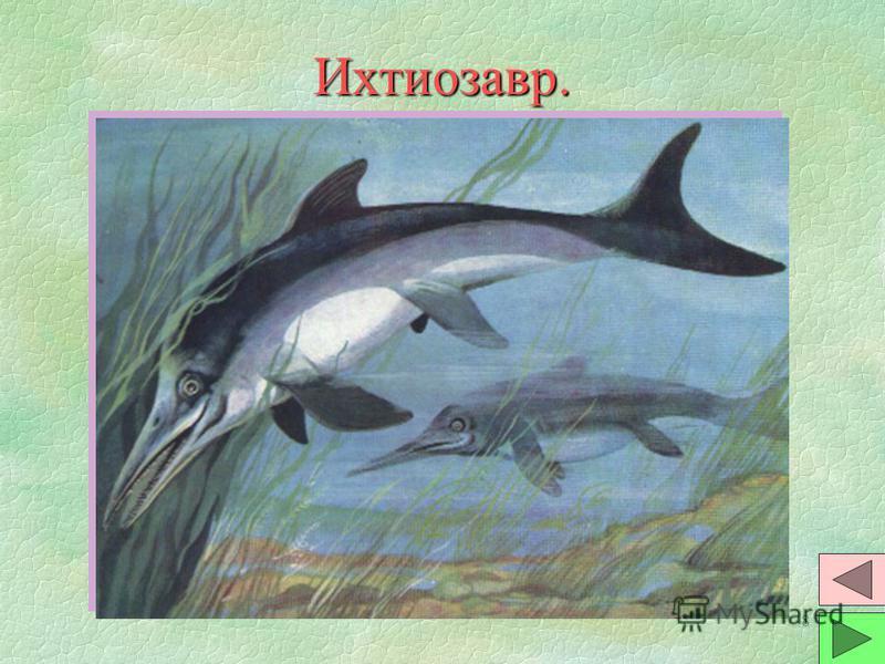 7 Аммониты и белемниты 2. §Белемниты похожи на современных кальмаров, хорошо плавали. На голове - большие глаза и 10 рук с присосками - 2 длинные и 8 коротких. §Раковина находилась внутри тела. Считается, что она была известковой. Ряд ученых считают,
