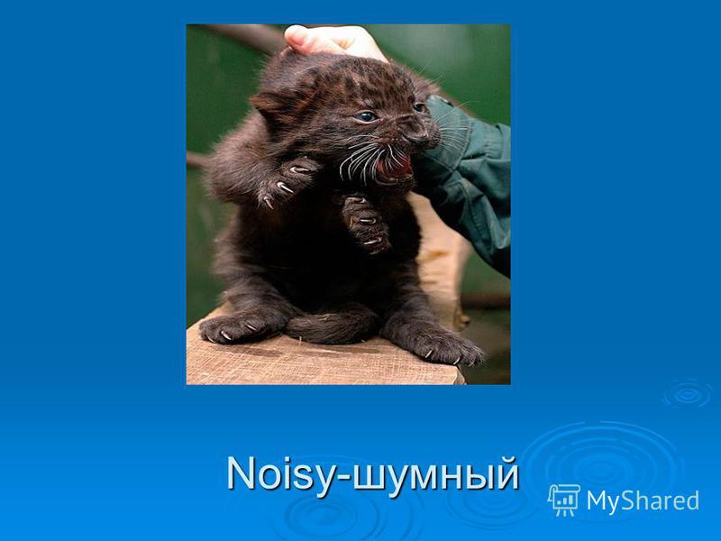 Noisy-шумный