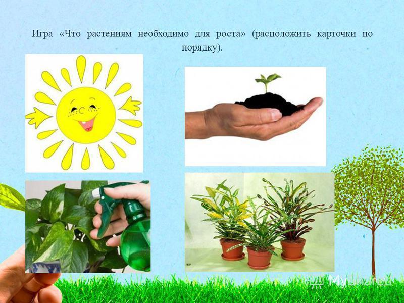 Игра «Что растениям необходимо для роста» (расположить карточки по порядку).