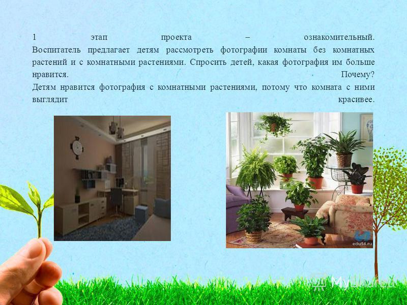 1 этап проекта – ознакомительный. Воспитатель предлагает детям рассмотреть фотографии комнаты без комнатных растений и с комнатными растениями. Спросить детей, какая фотография им больше нравится. Почему? Детям нравится фотография с комнатными растен